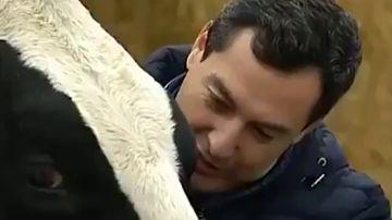 La surrealista conversación de Juanma Moreno con una vaca en plena campaña electoral