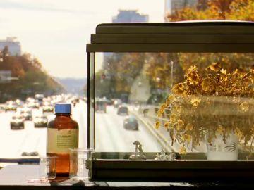 El experimento que demuestra cómo afecta la contaminación a todos los seres vivos