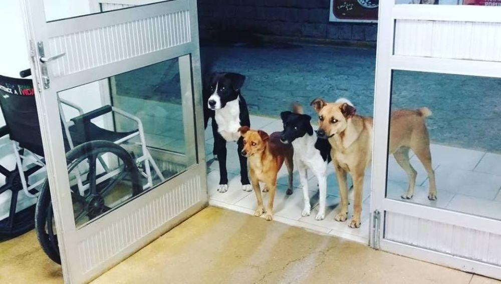 Cuatro perros esperan ingresado en el hospital