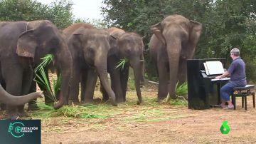 Terapia de rehabilitación con elefantes