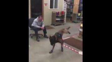 El desternillante vídeo de la reacción de un perro policía al probarse por primera vez sus botas de nieve