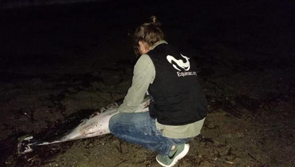 Aparece muerto un delfín en Roquetas de Mar (Almería)