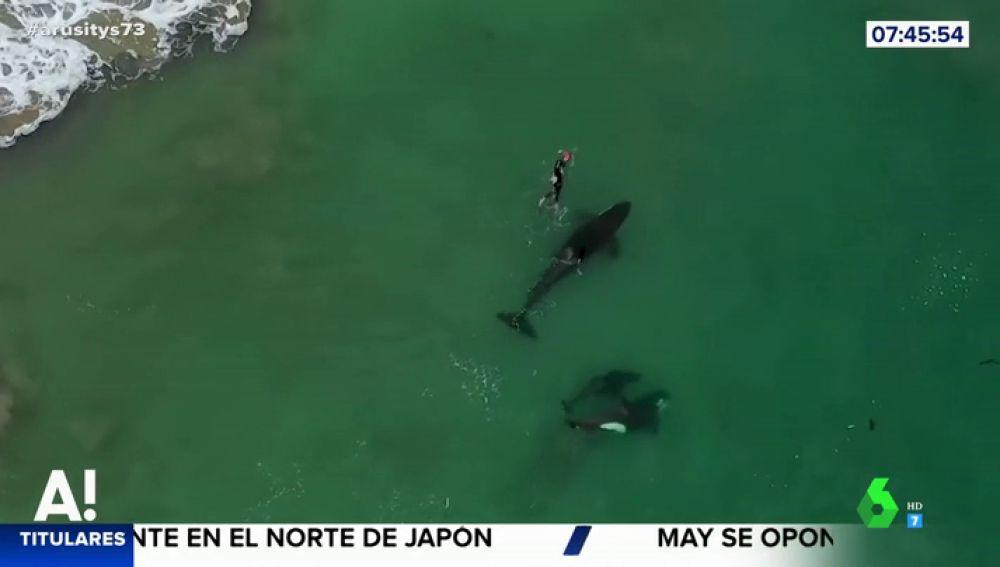 El impresionante momento en el que una nadadora es sorprendida por un grupo de orcas en mar abierto