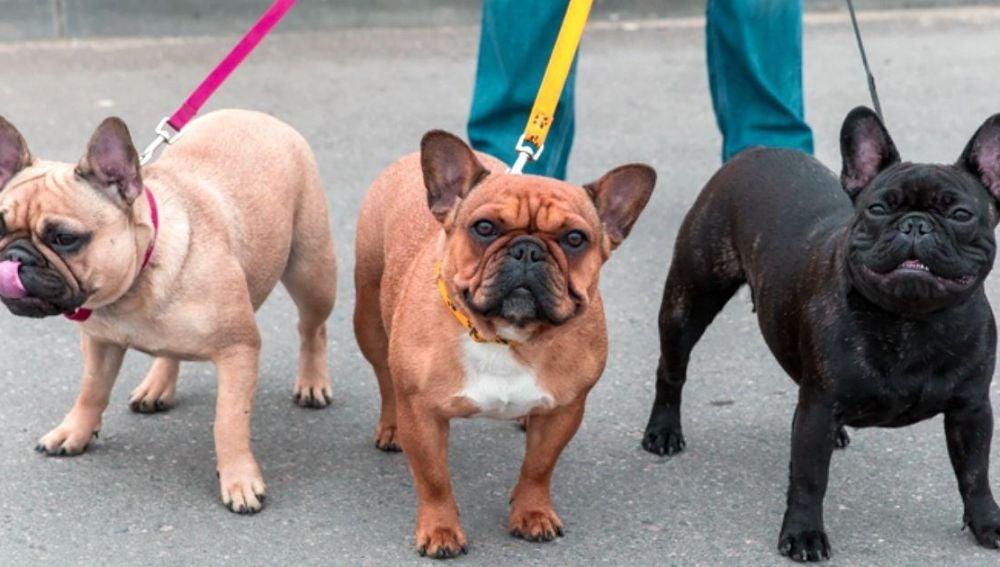 Perro paseando / Imagen de archivo