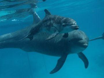 Imagen de una pequeña cría de delfín