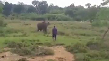 El impactante vídeo de un elefante que pisotea hasta la muerte al hombre que intentaba hipnotizarle