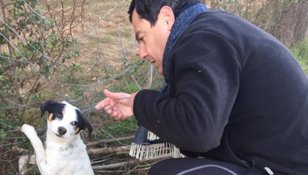 Juanma Moreno se encuentra un perrito abandonado