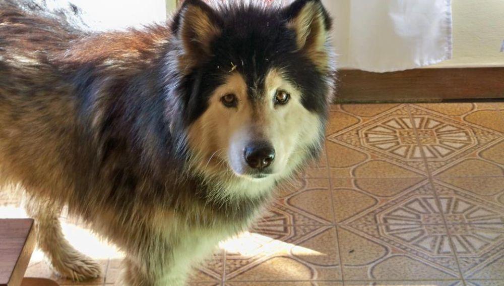 Chornyk, perra robada hace seis años