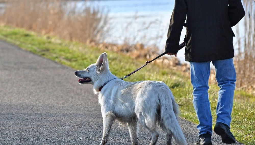 Imagen de archivo de un hombre paseando a su perro
