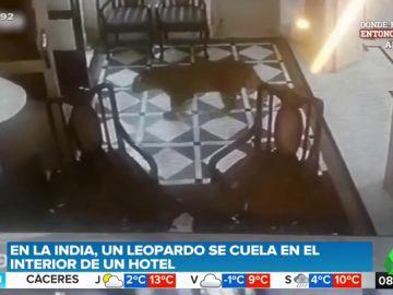 Un leopardo irrumpe en la recepción de un hotel muy popular entre los famosos de Bollywood