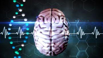 Ondas cerebrales (Archivo)