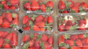 Imagen de fresas envasadas en cajas de plástico.
