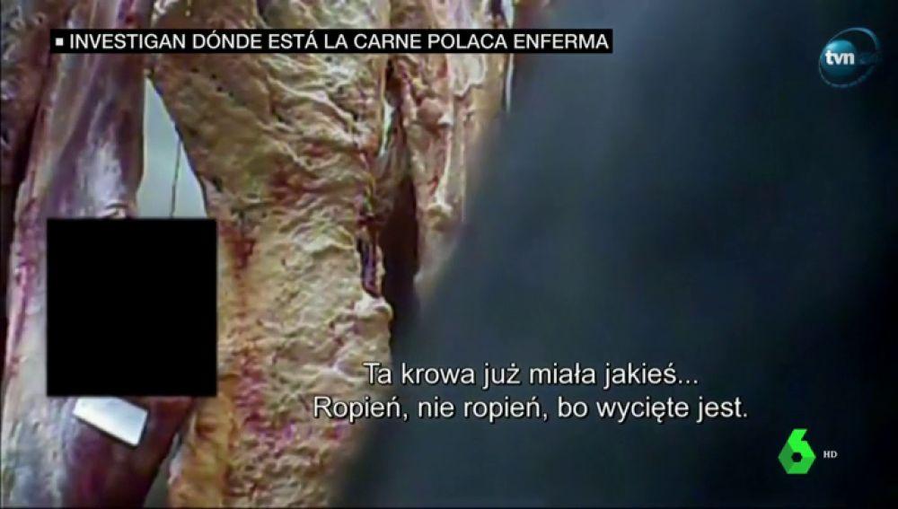 Carne contaminada de Polonia