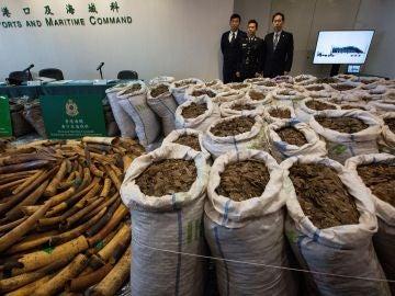 Autoridades hongkonesas incautan más de dos toneladas de colmillos de elefante