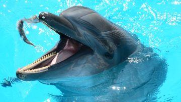 Protestan por la muerte de cuatro delfines en centro de atracciones de EEUU