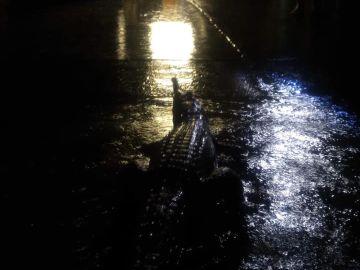 Una vecina publicó esta imagen de un cocodrilo frente a la casa de sus padres