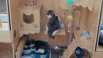 Un informático chino crea un refugio para gatos con inteligencia artificial