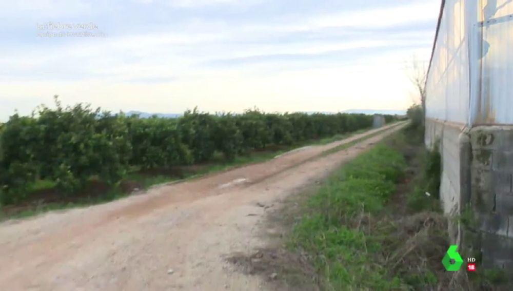 Más de 100.000 plantas de cánnabis legal o cómo apostar por un negocio diferente