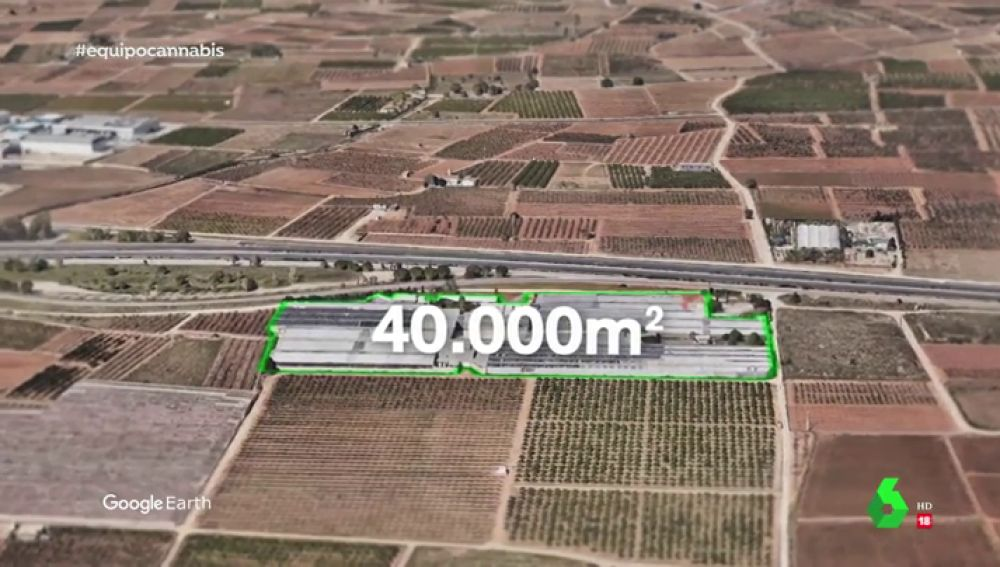 Una gran plantación de cánnabis legal