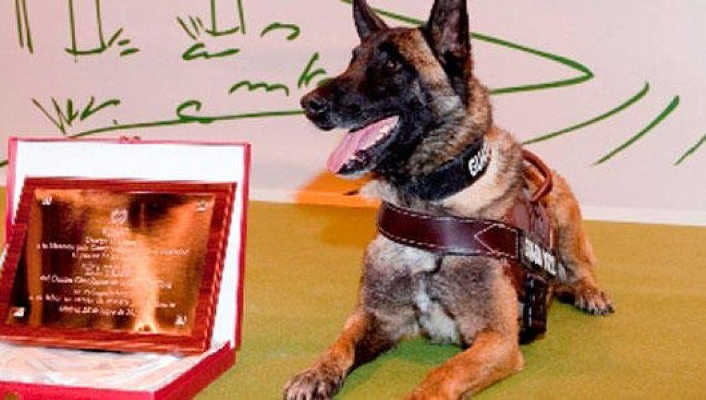 Elton, el perro de la Guardia Civil que se retira tras participar en más de 500 casos