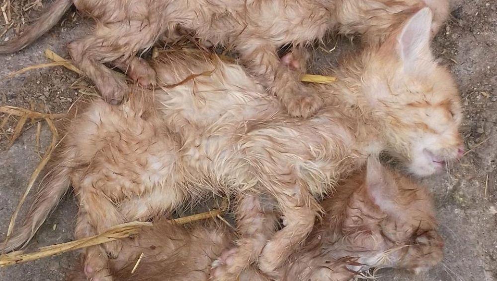 Imagen de los gatos hallados muertos de hambre