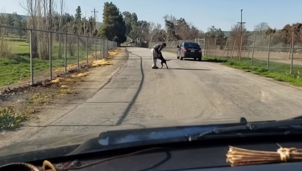 El hombre empuja al perro y le abandona en medio de una carretera.