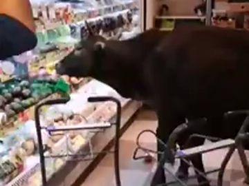 Cuatro vacas invaden un supermercado en Hong Kong para darse un buen festín