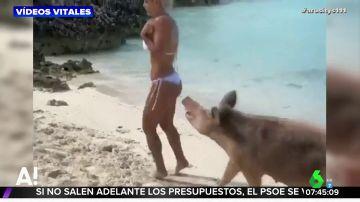 Una modelo y un cerdo