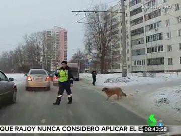 Un agente para el tráfico para que un perro cruce
