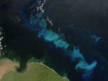Proliferación de fitoplancton en la costa argentina