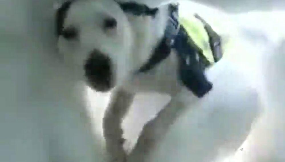Esto es lo que ve una víctima de una avalancha mientras un perro la localiza para salvarla