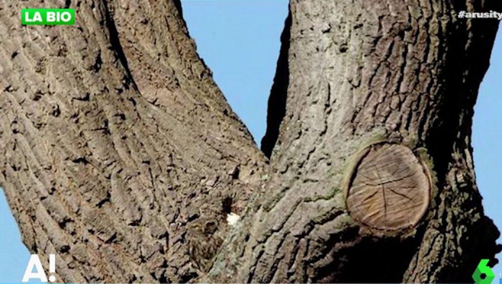 El nuevo reto de agudeza visual: ¿Puedes ver el animal que se esconde en este árbol?