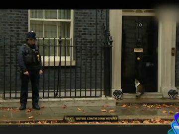 El gato Larry, el verdadero 'jefe' de Gran Bretaña