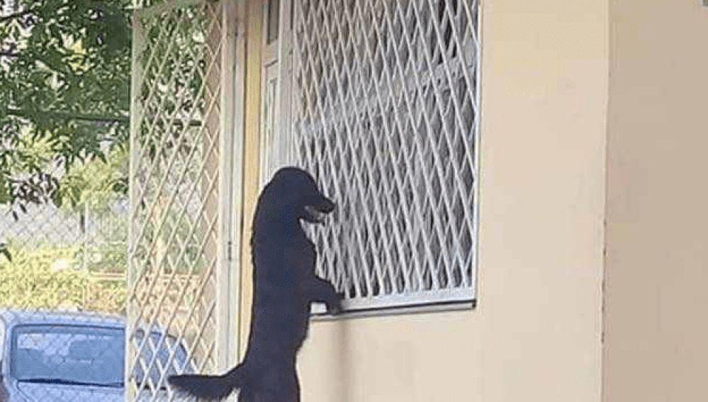 Perro viendo a su dueño en el interior de un colegio