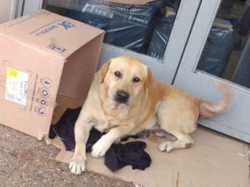 Imagen del labrador que esperó a su dueño a las puertas del hospital en Argentina