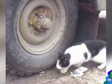 Un gato y un ratón