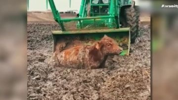 Animales atrapados en el lodo: las peores imágenes que dejan las inundaciones en Nebraska