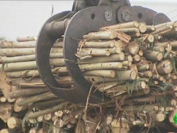 Galicia podría ser la puerta a Europa de la madera ilegal que está acabando con las selvas tropicales