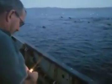 Un pescador arrojando un explosivo para ahuyentar a un grupo de leones marinos