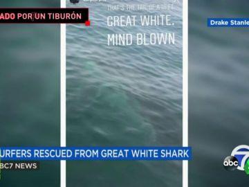 """Un surfista se encuentra con un tiburón blanco gigante: """"Pensaba que era una ballena"""""""