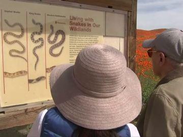 Eso no se toca: el aviso que advierte a los turistas de que las serpientes matan