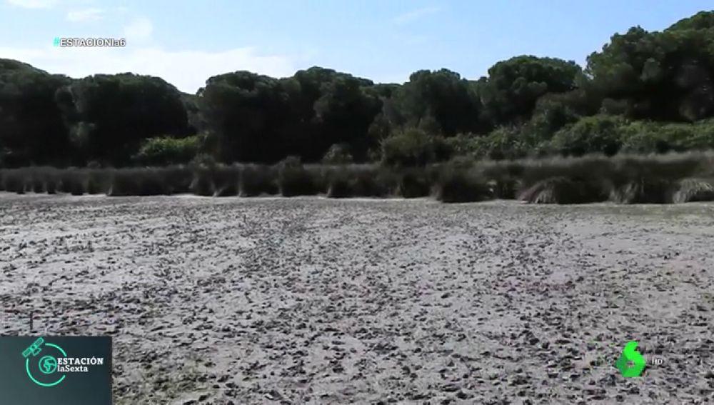 La falta de lluvias arrasa con el Parque Nacional de Doñana: muchas especies no podrán reproducirse