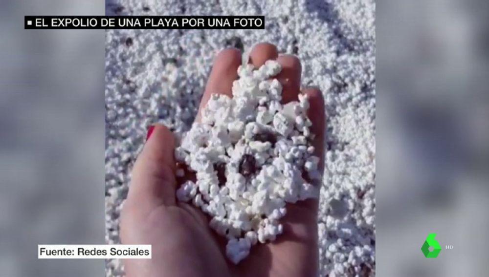 Las algas con forma de palomita de una playa en Fuerteventura provocan la invasión de turistas