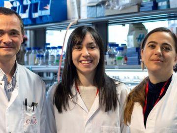 Alfonso Mora, Leticia Herrera-Melle (c) y Guadalupe Sabio (d), investigadores del equipo CNIC que ha hallado una explicación por la que el cáncer de hígado incide más en los varones
