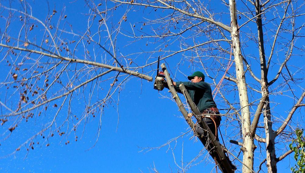 Un hombre talando un árbol (Archivo)