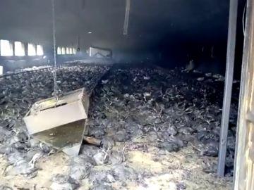 Imagen de archivo de un incendio en una granja de pollos en Almería