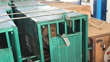 Animales rescatados del zoológico de Gaza