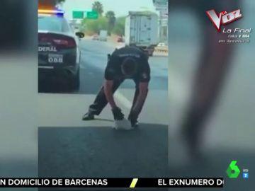 El emotivo rescate de un agente de Policía a un cachorro en plena autopista