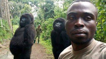 Un guarda forestal del Congo se hace un 'selfie' con dos gorilas y revoluciona las redes sociales