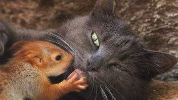 Imagen de una gata acompañada de una ardilla a la que ha adoptado